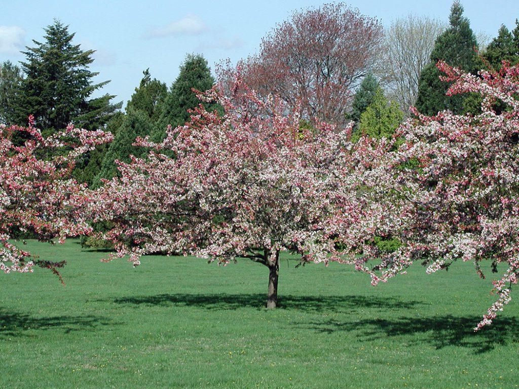 Gentil Fertilizing Backyard Fruit Trees