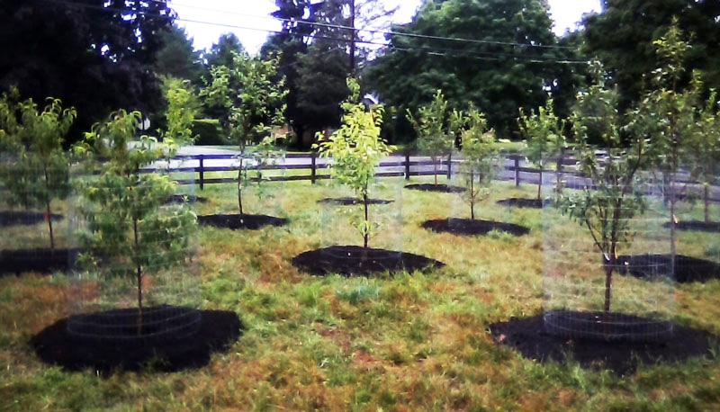 Peach Twig Borer, Backyard Orchard Irrigation - IPM Pest ...